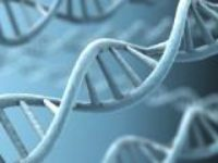 Image courtesy of US Human Genome Project Knowledge base