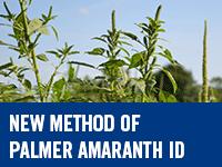 Eurofins - New Method of Palmer Amaranth Identification