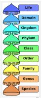 Linnaean classification hierarchical categories or ranks