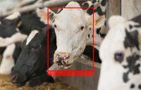 Cargill, facial recognition technology