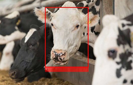 Cargill, facial recognition technology