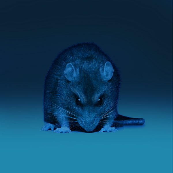 Rodent, Bayer, Digital pest management