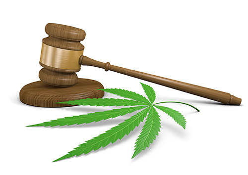 Cannabis, gavel