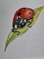 Ladybug, Decernis