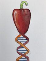 Pepper, food fraud, DNA